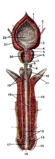 Мужские потрясающе половые органы