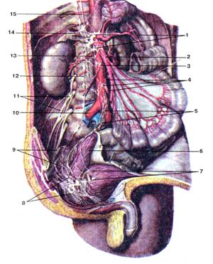 Брюшное аортальное сплетение