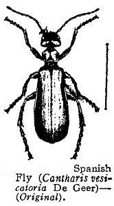 Шпанская мушка (Cantharis vesicatoria)