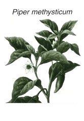 Перец опьяняющий, Кава Кава (Piper methysticum, Kava-kava, Awa-samoa)