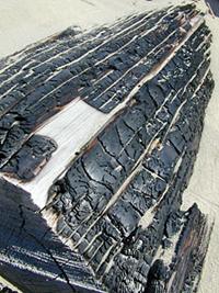 Уголь древесный (Carbo vegetabilis)
